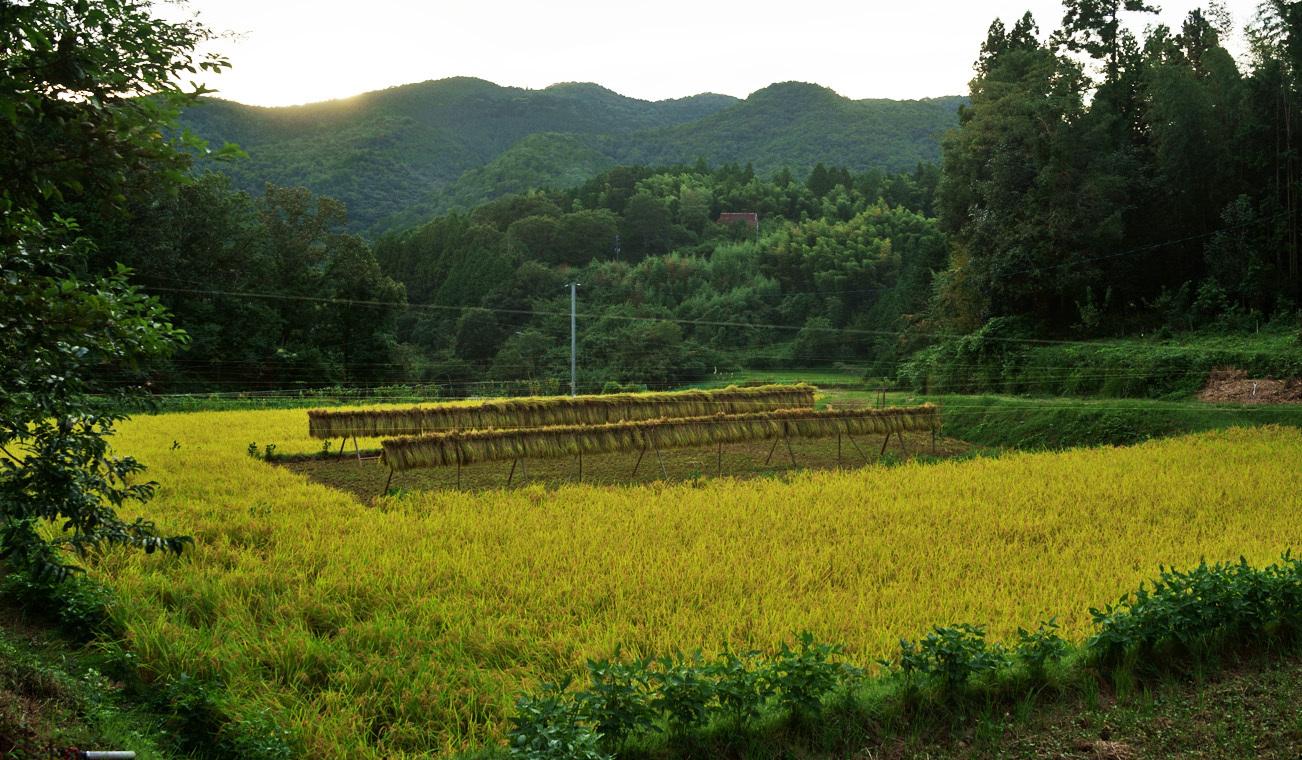 ヤマビコの稲刈り_d0231263_23080041.jpg