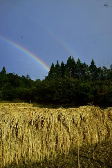 ヤマビコの稲刈り_d0231263_23091754.jpg
