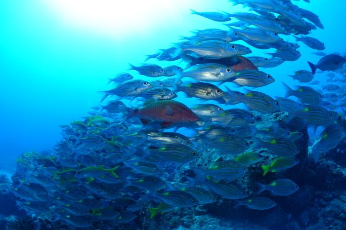 201012   深場と外洋へ❕  固有種ミズタマヤッコ&タテジマヤッコとの出会い(^^)/_a0335173_17595746.jpg