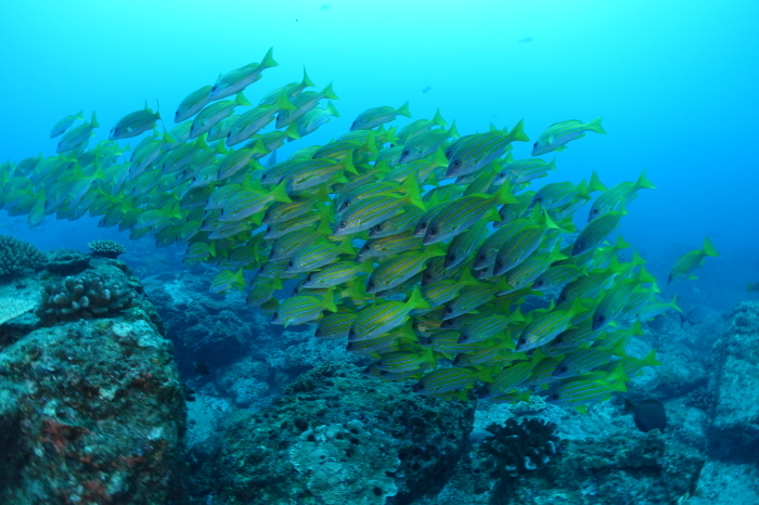201012   深場と外洋へ❕  固有種ミズタマヤッコ&タテジマヤッコとの出会い(^^)/_a0335173_18000364.jpg