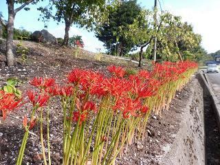 蕎麦の花と彼岸花_e0046477_15533530.jpg