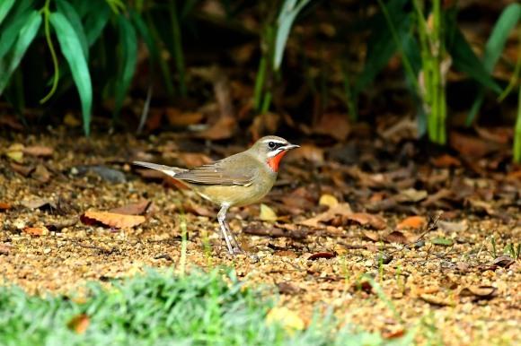 大阪城公園の小鳥さん達_c0164881_11244484.jpg