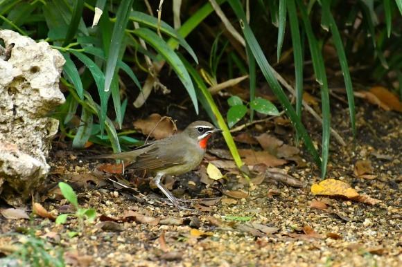 大阪城公園の小鳥さん達_c0164881_11251253.jpg