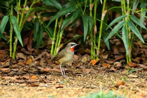 大阪城公園の小鳥さん達_c0164881_11253470.jpg