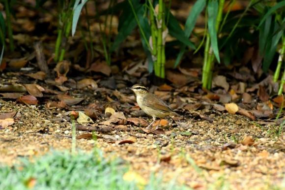 大阪城公園の小鳥さん達_c0164881_11265294.jpg