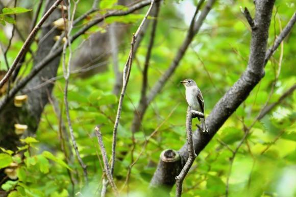 大阪城公園の小鳥さん達_c0164881_11274227.jpg