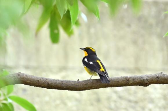 大阪城公園の小鳥さん達_c0164881_11283162.jpg