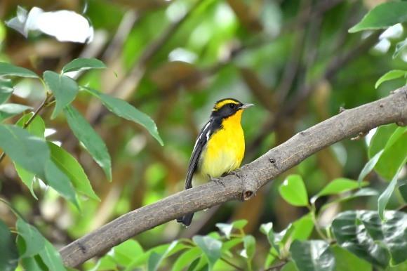 大阪城公園の小鳥さん達_c0164881_11285968.jpg