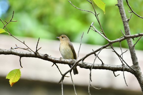 大阪城公園の小鳥さん達_c0164881_11293369.jpg
