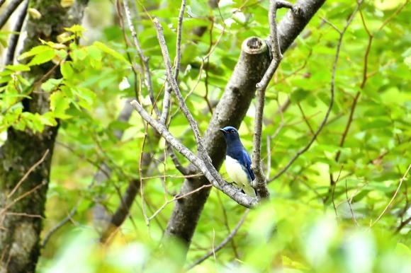 大阪城公園の小鳥さん達_c0164881_11295017.jpg