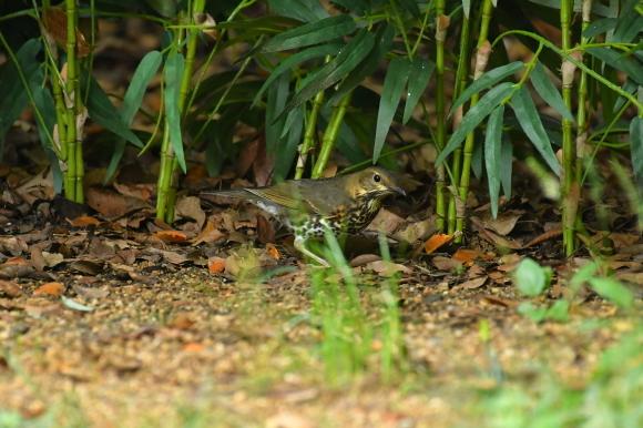 大阪城公園の小鳥さん達_c0164881_11302823.jpg