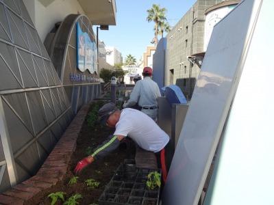 ガーデンふ頭総合案内所前花壇の植替えR2.10.12_d0338682_16405300.jpg