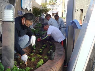 ガーデンふ頭総合案内所前花壇の植替えR2.10.12_d0338682_16410353.jpg