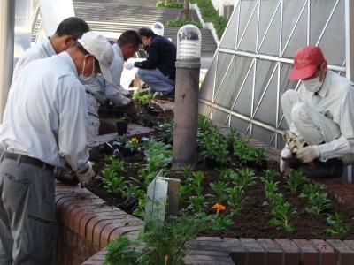 ガーデンふ頭総合案内所前花壇の植替えR2.10.12_d0338682_16413278.jpg