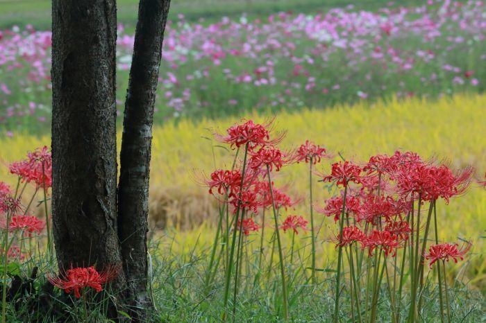 秋の訪れ_b0284387_17570637.jpg