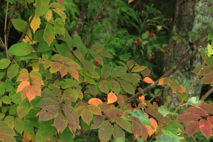 秋の訪れ_b0284387_17573271.jpg