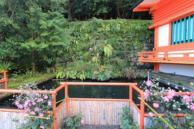 熊野那智大社のキイジョウロウホトトギスの花(撮影:10月11日)_e0321325_16084191.jpg