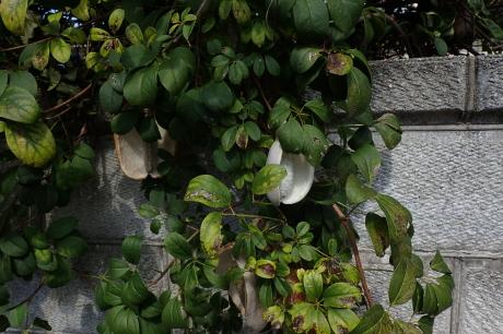 藍那古道~丹生山田の里 源平の歴史に触れる里山歩き_c0218841_13354826.jpg
