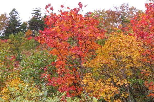 秋が深まって行きます_b0238249_20393311.jpg