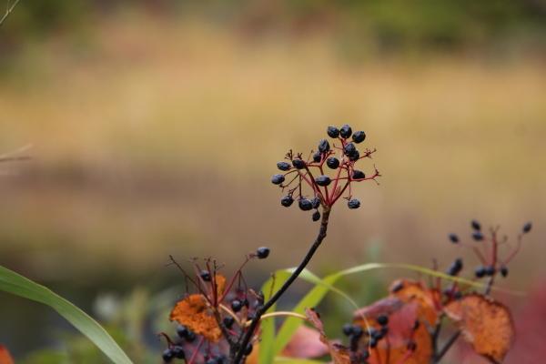 秋が深まって行きます_b0238249_20442179.jpg