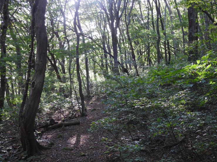 三瓶山裾野散歩_f0214649_04365746.jpg