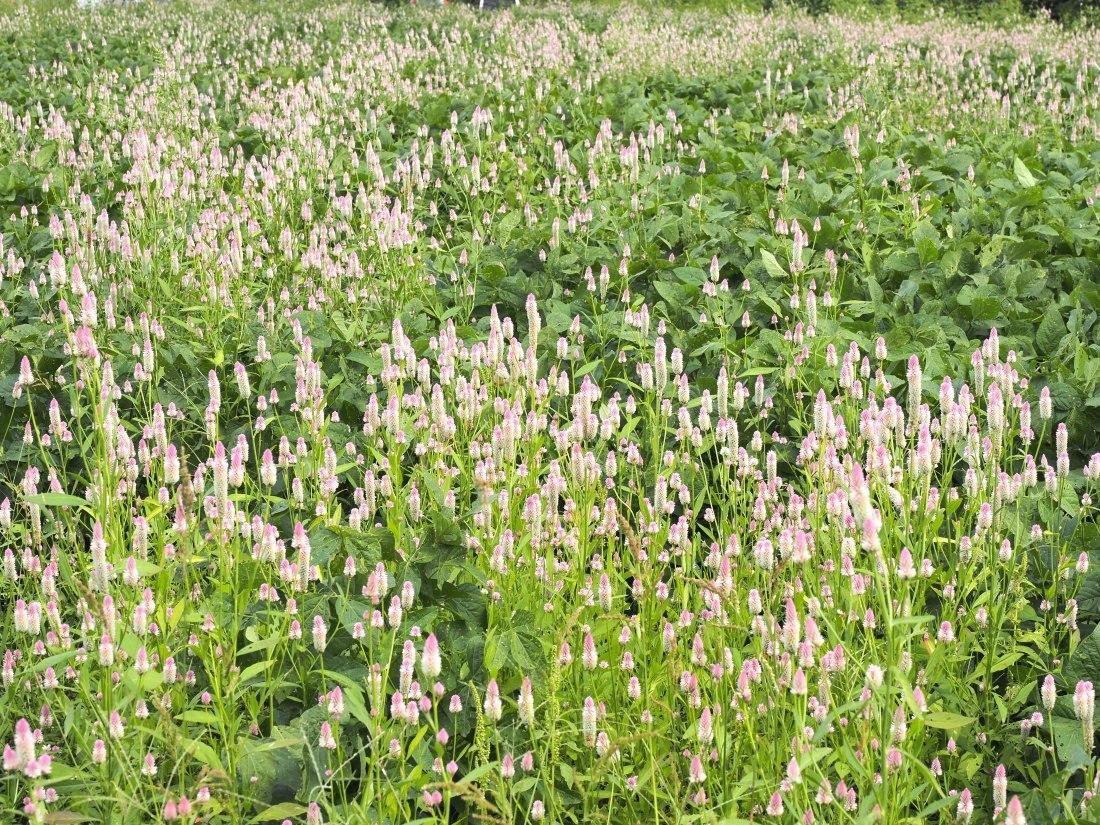 蕎麦畑の傍で   三重県_d0286954_04430287.jpg