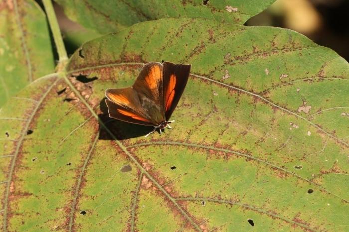 河原で見つけたキタキチョウの蛹ほか五目撮り_e0224357_19572286.jpg