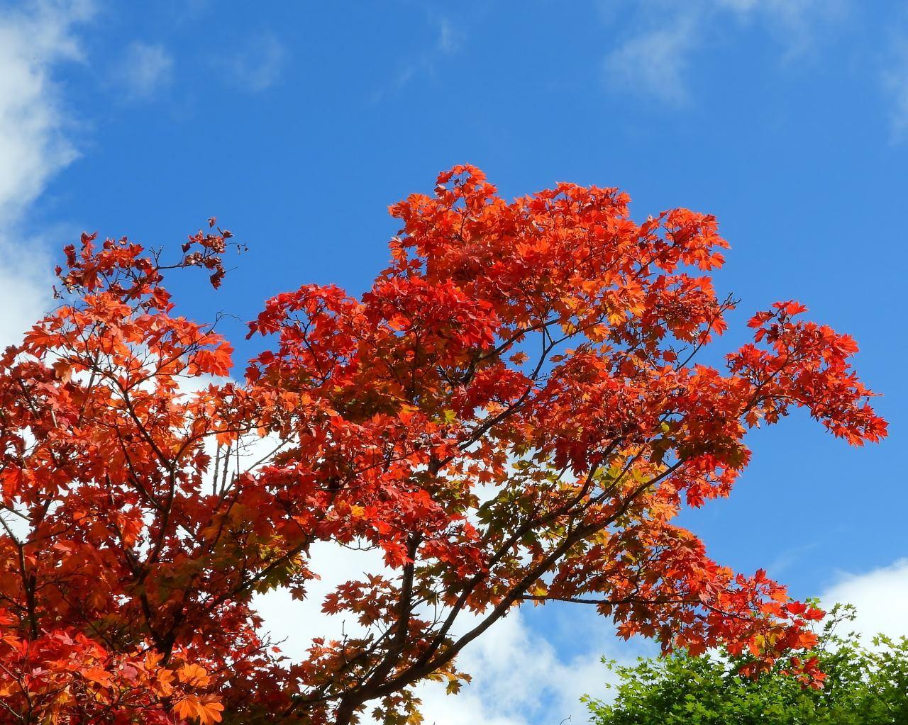 軽井沢レイクガーデンから 深まる秋を_c0305565_17343251.jpg