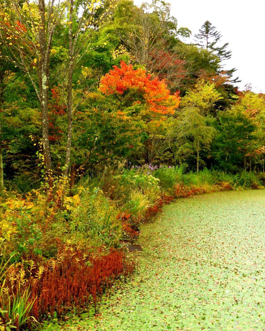 軽井沢レイクガーデンから 深まる秋を_c0305565_17352023.jpg