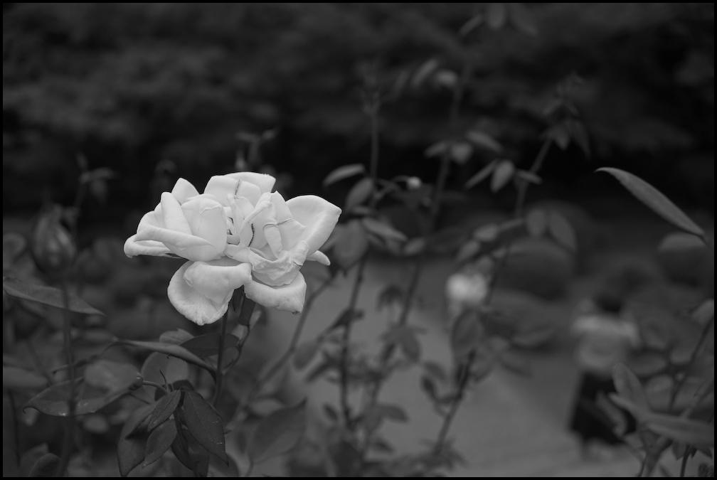 旧古河庭園 -21_b0340572_20421778.jpg