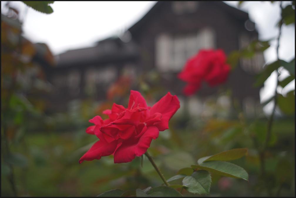 旧古河庭園 -21_b0340572_20422562.jpg