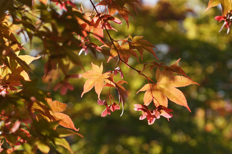 紅葉の季節_d0162994_12365640.jpg