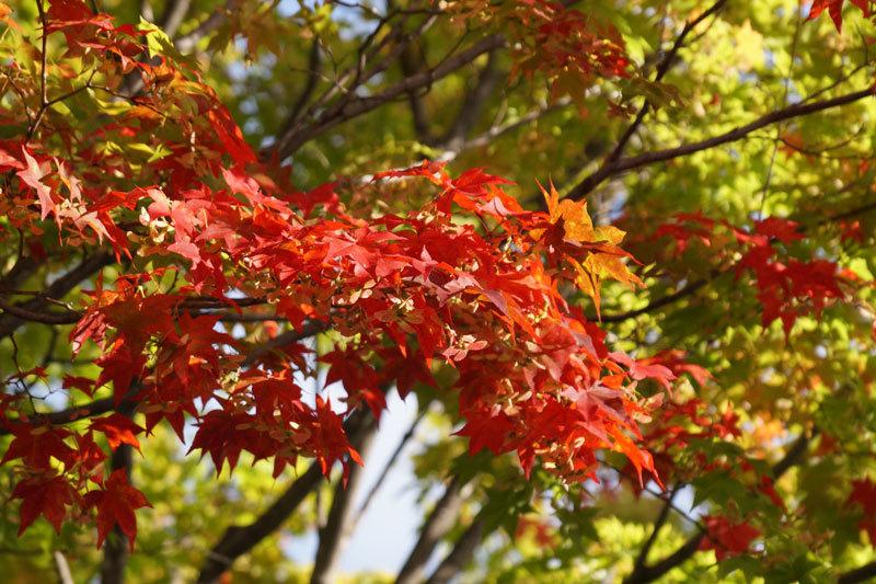 紅葉の季節_d0162994_12371235.jpg