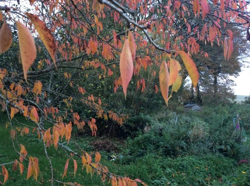 秋のひと時は、家族みんなと共に_b0110999_05062136.jpeg