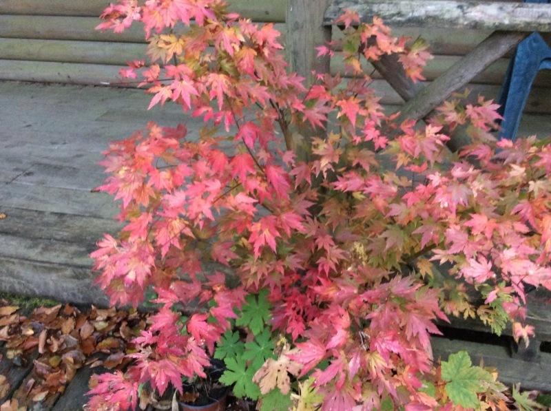秋のひと時は、家族みんなと共に_b0110999_05075133.jpeg