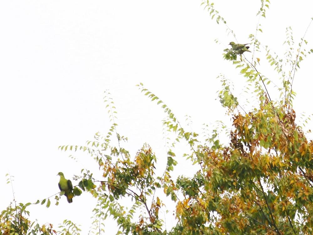 探鳥は、運しだい、、_f0305401_15233388.jpg