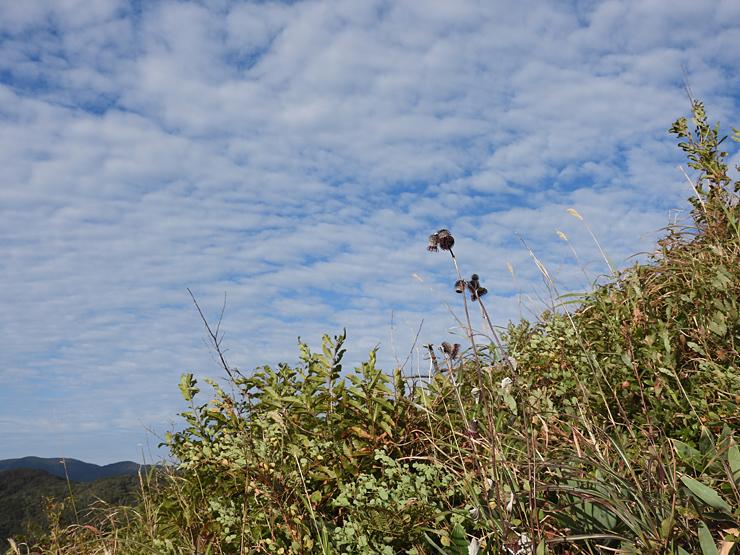 深入山①_f0214649_04322301.jpg