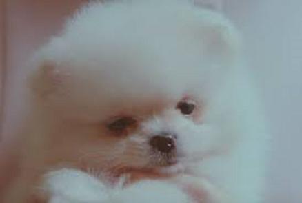 子犬_f0338150_07563201.png