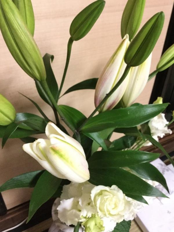 花が無い!_c0331864_20490583.jpeg