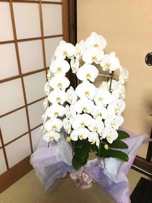 花が無い!_c0331864_20494137.jpeg