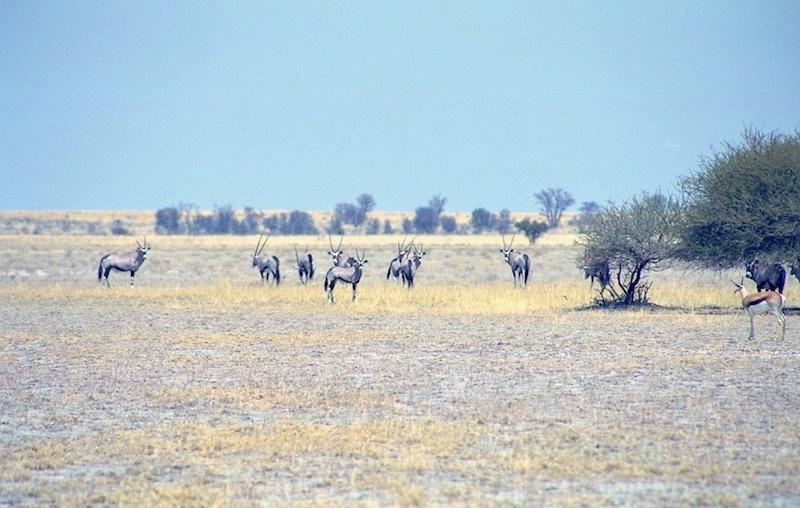 アフリカの記憶 154_d0010432_23200899.jpg