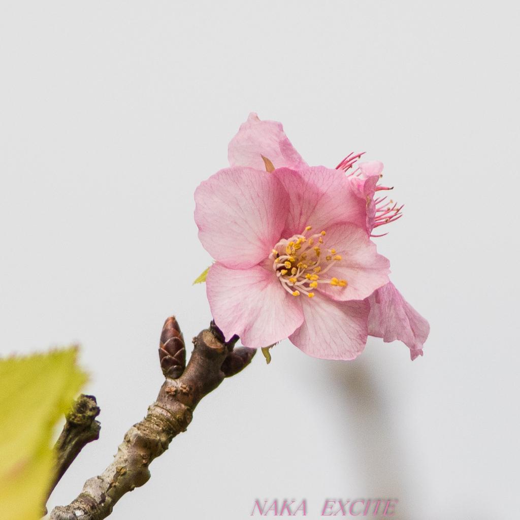 お休み (2020/10/15 曇り)_f0281533_08013104.jpg
