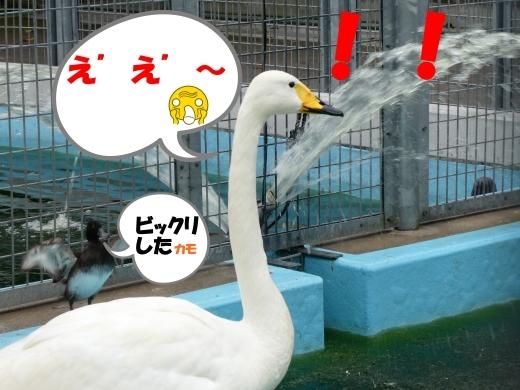 函館公園ニュース  10月15日(木)_e0145841_14264572.jpg