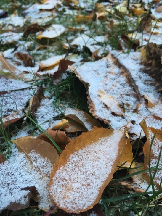 初雪 ー フェアバンクス_b0135948_12575577.jpg