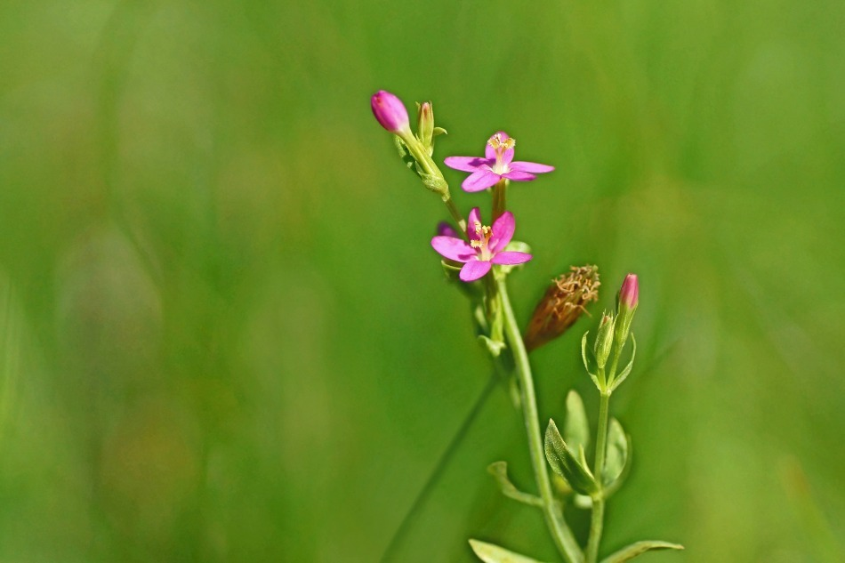 花々   2020-10-23_e0229455_16581005.jpg
