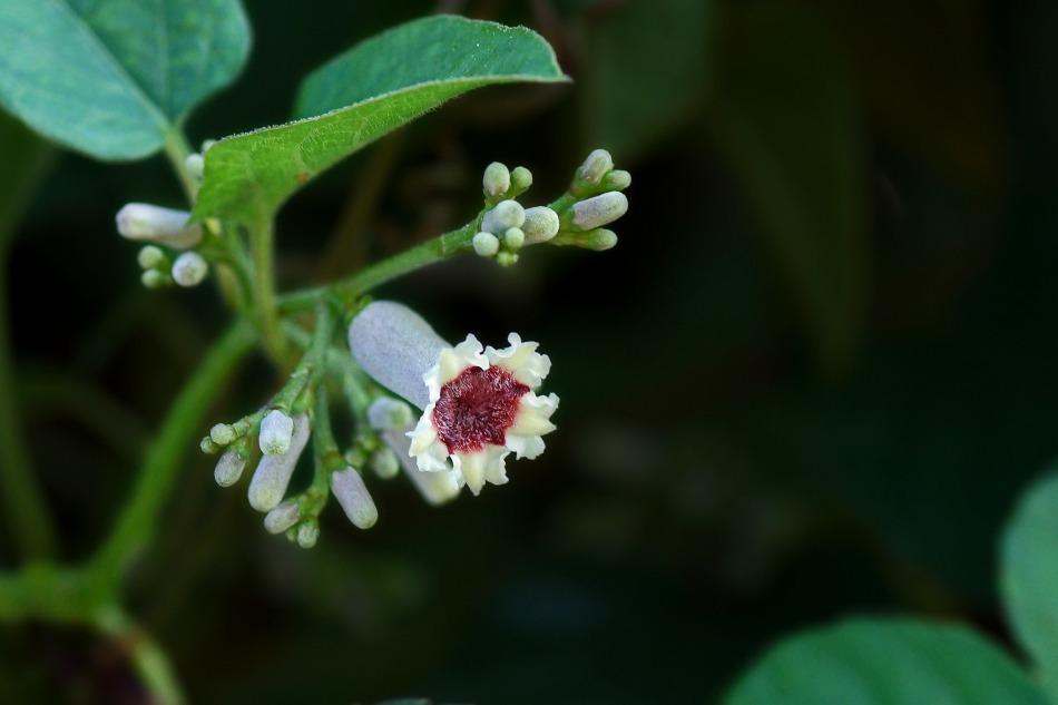 花々   2020-10-23_e0229455_16585080.jpg