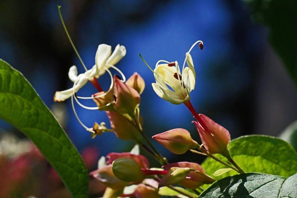 開花の推移  2020-10-29_e0229455_17225710.jpg