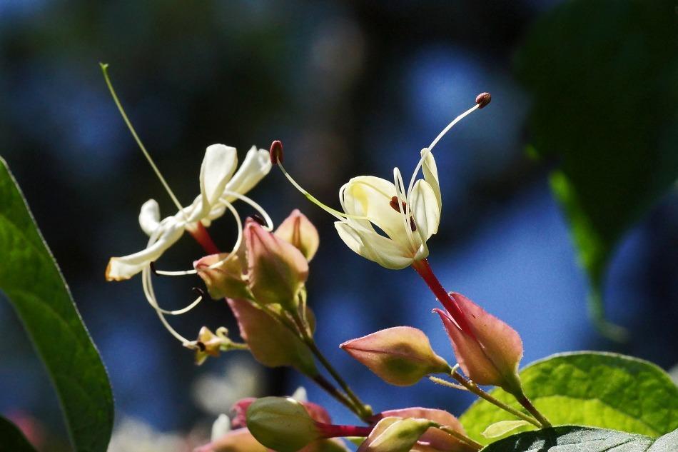 開花の推移  2020-10-29_e0229455_17230654.jpg