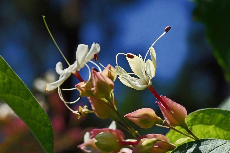 開花の推移  2020-10-29_e0229455_17231718.jpg