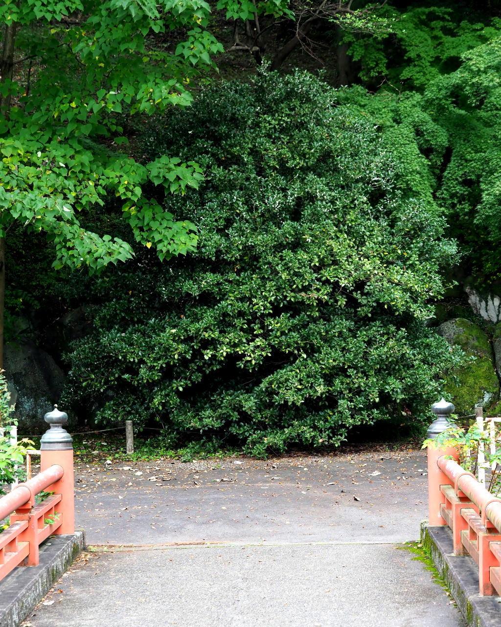 少林山達磨寺で 主役はヒイラギモクセイ_c0305565_17202576.jpg